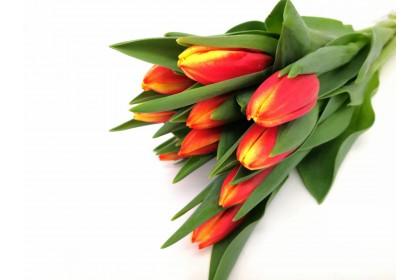Tulip CUT  10 STEM ORANGE TWO-TONE