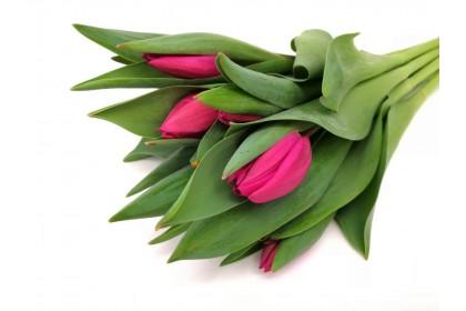 Tulip CUT  10 STEM DARK PURPLE
