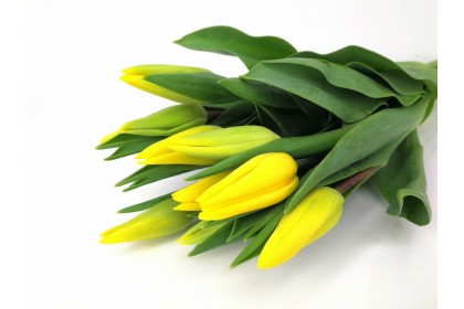 Tulip Strong Gold colour  10 Stem