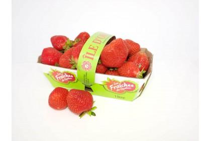 berries Quebec STRAWBERRIES