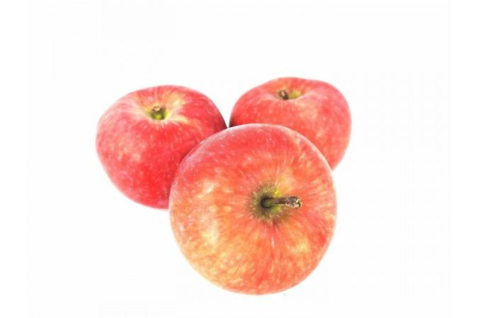 Paulared apple ontario