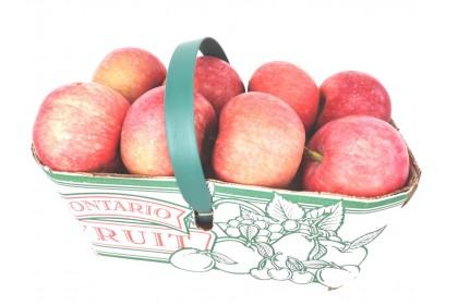 Apple Paulared Ontario /LB