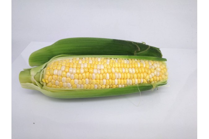 CORN ONTARIO 3 FOR $2.00