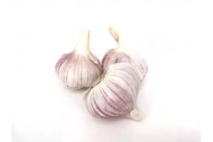 Garlic jumbo Fresh LB
