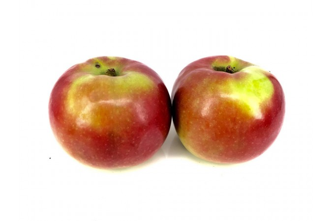 apple ontario mcintosh
