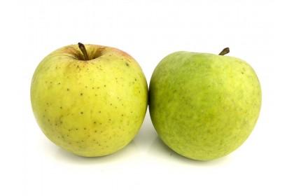 Apple Mutsu Ontario