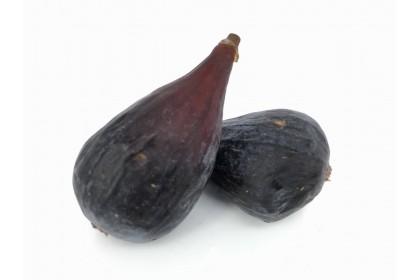 Figs 1.49EA