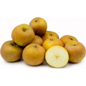 Apple Russet $1.99/lb