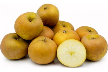 Apple Russet ont