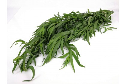 Herb Tarragon