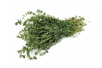 Herb Thyme
